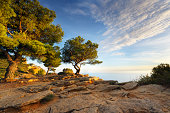 Pine Tree in the evening sun high above the mediterranean sea at French Riviera.