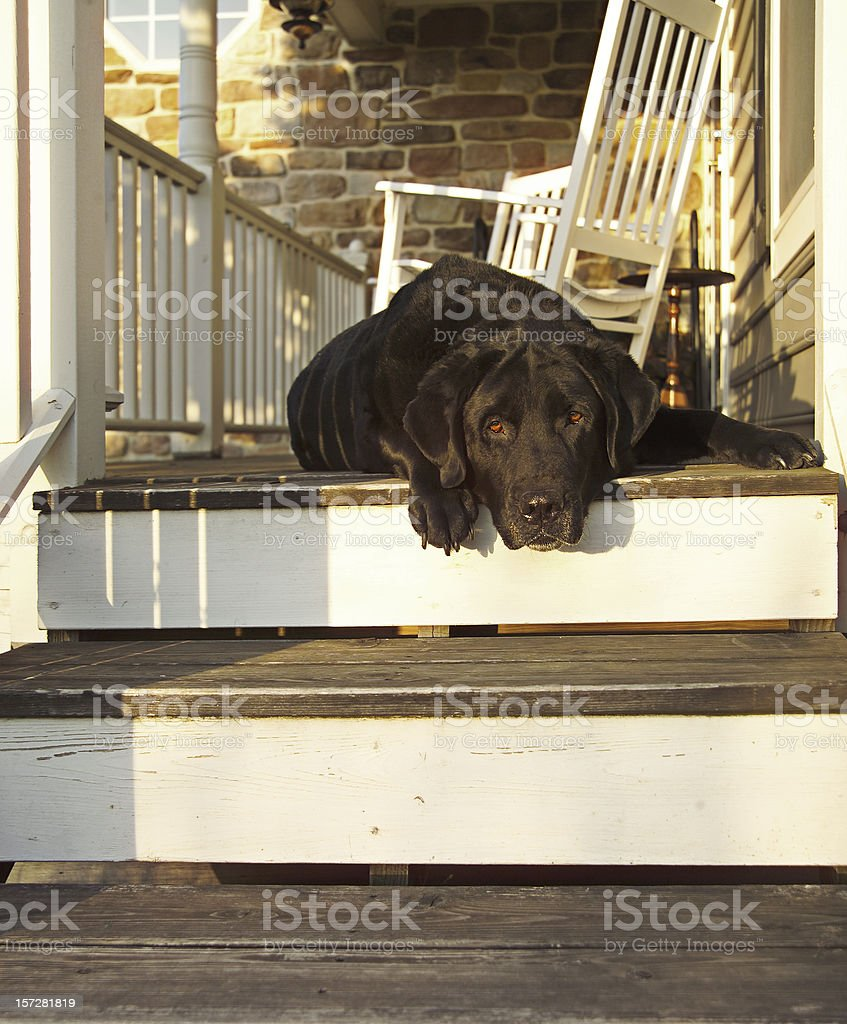 old porch dog royalty-free stock photo