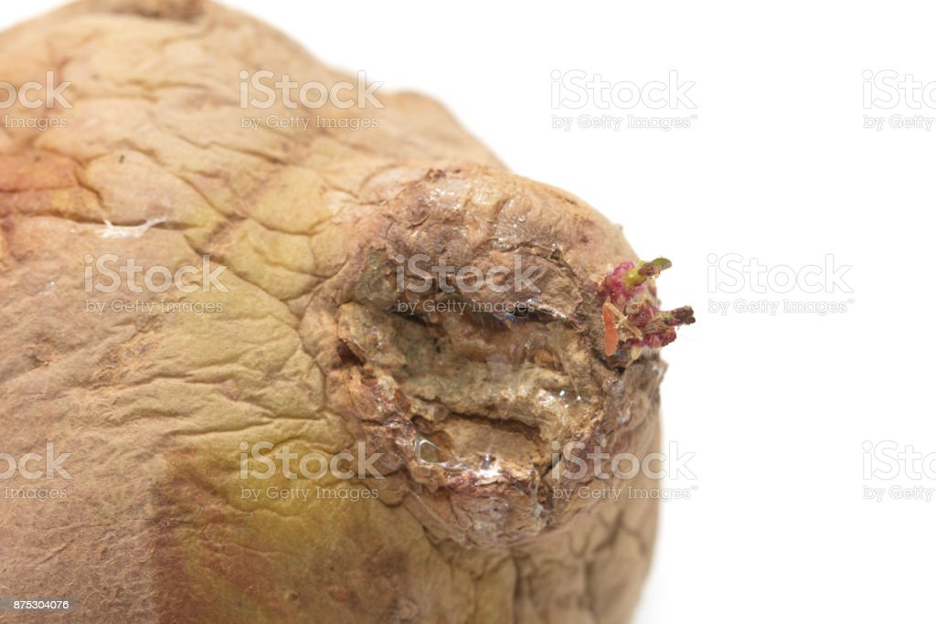 old potatoes on a white background stock photo