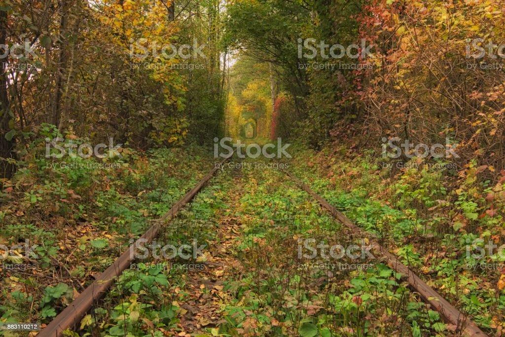 Ancienne voie ferrée à travers la forêt en automne. Fameux Tunnel d'amour formé par les arbres. Klevan, Rivnenska obl. Ukraine - Photo