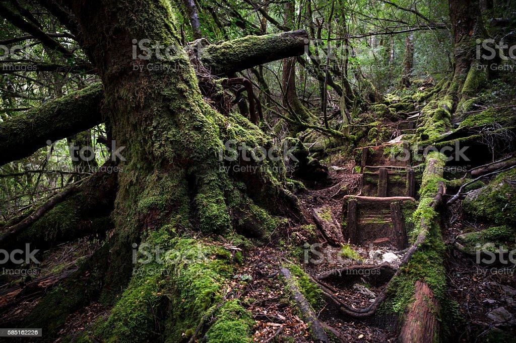 old rainforest. stock photo