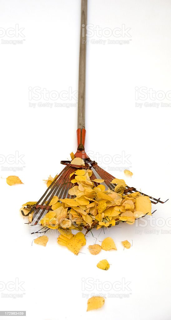 Old Rake on White royalty-free stock photo