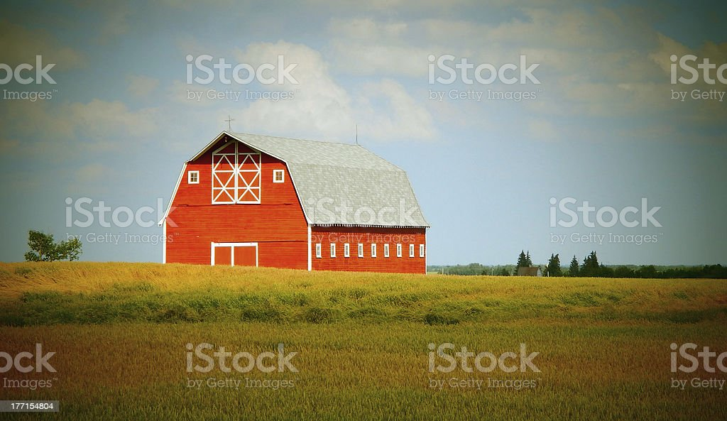 Old Red Barn and Wheat Field royalty-free stock photo