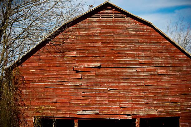 alte rote scheune - wie alt werden kühe stock-fotos und bilder