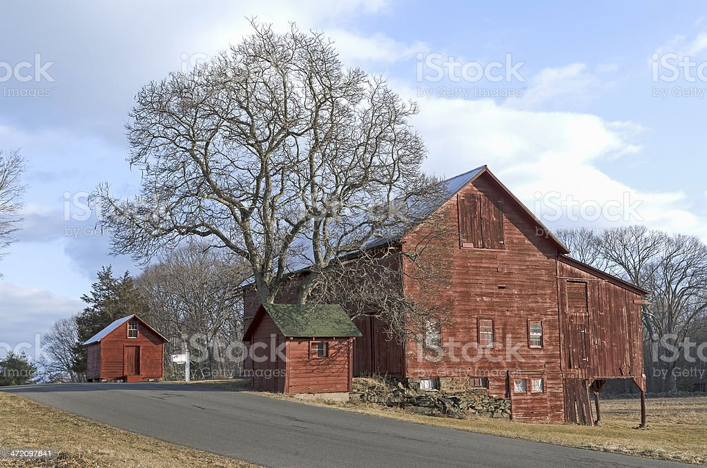 Old Red Barns and Tree on Country Road. stock photo