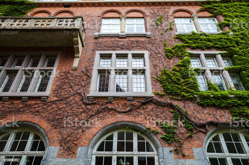 Old red brick building, covered with green ivy stock photo