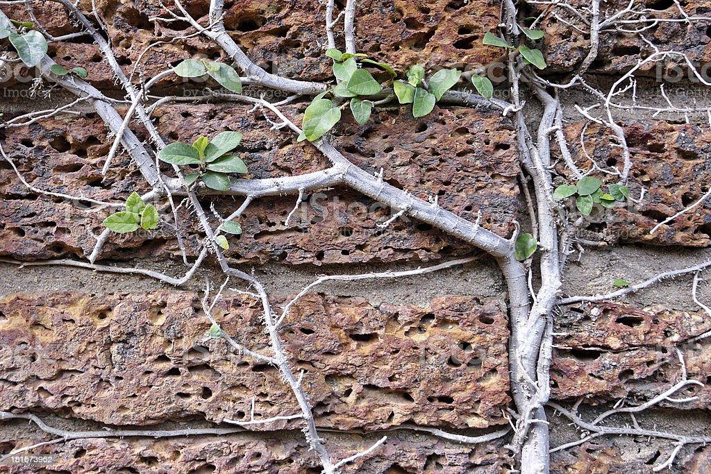 old red brick wal royalty-free stock photo