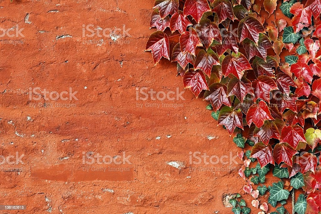 Old red wall with boston ivy. stock photo