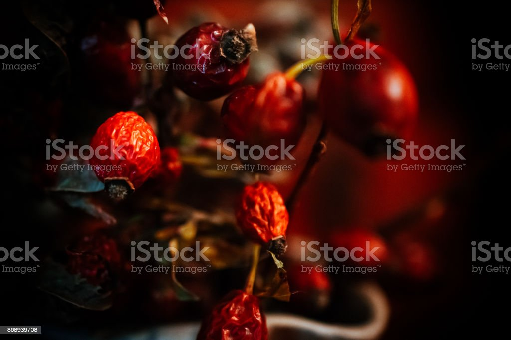 Old Ripe Red Rose Hips stock photo