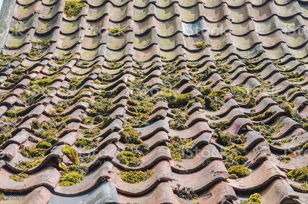 Old roof tiles, green education, roofs Outdated Dachpfannne, brick green education and subsequent moss is often due to improved environmental conditions. Acid Rain Stock Photo