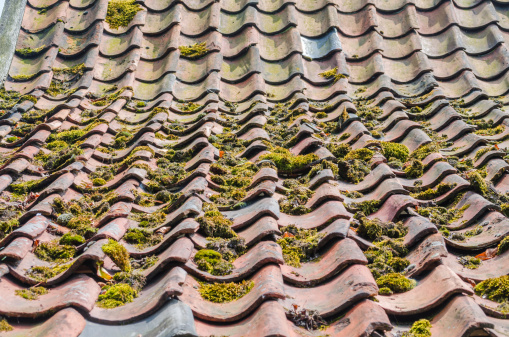 Old Roof Tiles Green Education Roofs Stock Photo - Download Image Now