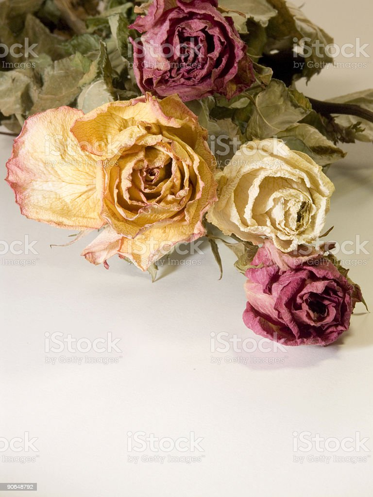 19- Old roses III stock photo