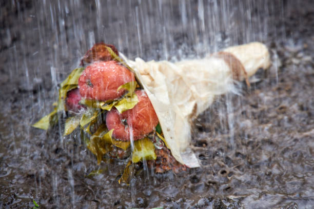 Old rotten bouquet of flowers and fruits lies on the ground in heavy rain Old rotten bouquet of flowers and fruits lies on the ground in heavy rain disavow stock pictures, royalty-free photos & images