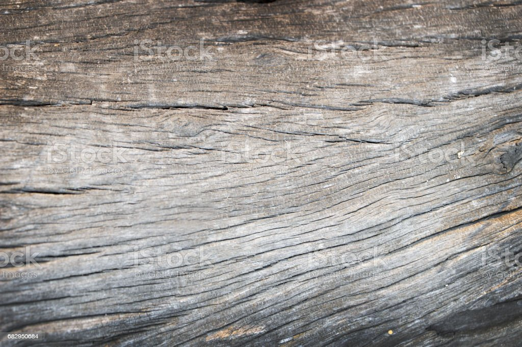 Old rough wood texture. Wooden texture. Wooden background. Tree texture. Tree background. Crack tree texture. Old tree texture. Old tree background. Exotic tree texture. Nature texture background. royalty-free stock photo
