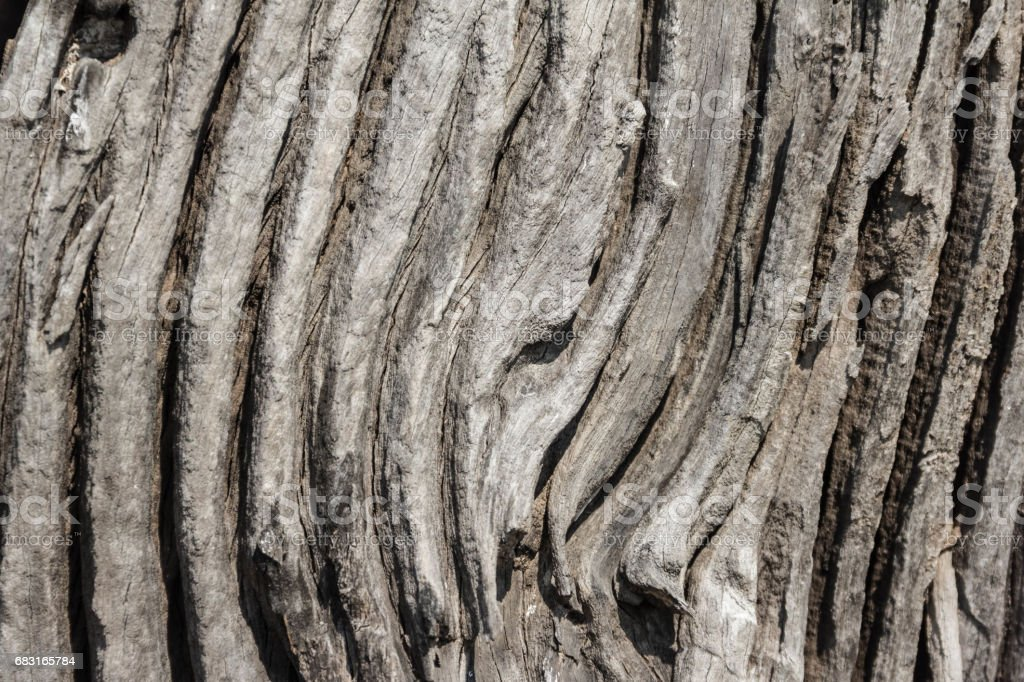 Old rough wood texture. Wooden texture. Wooden background. Tree texture. Tree background. Crack tree texture. Old tree texture. Old tree background. Exotic tree texture. Nature texture background. 免版稅 stock photo