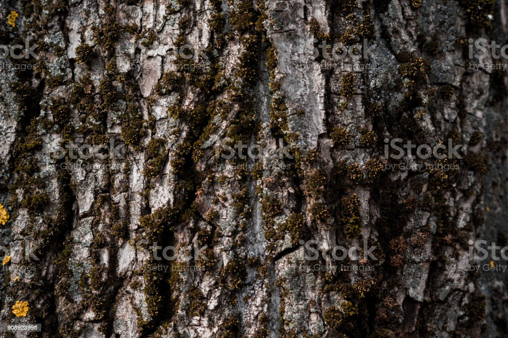 Old rough wood texture. Wooden texture. Wooden background. Tree...