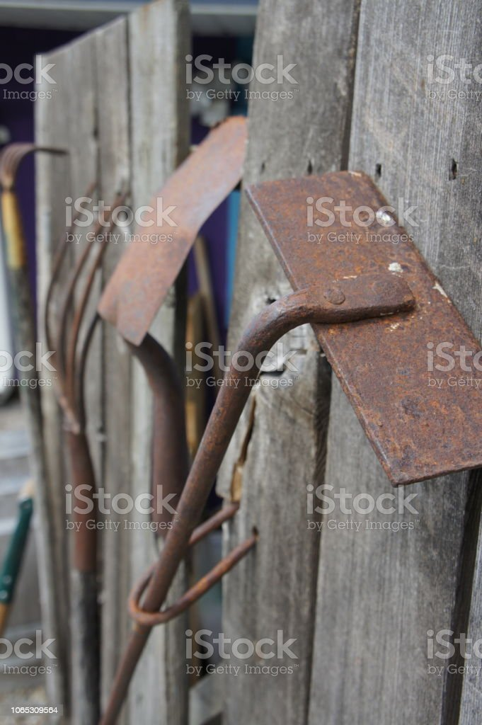 Old rusted farming gardening tools hanging on an old wooden panel fence stock photo