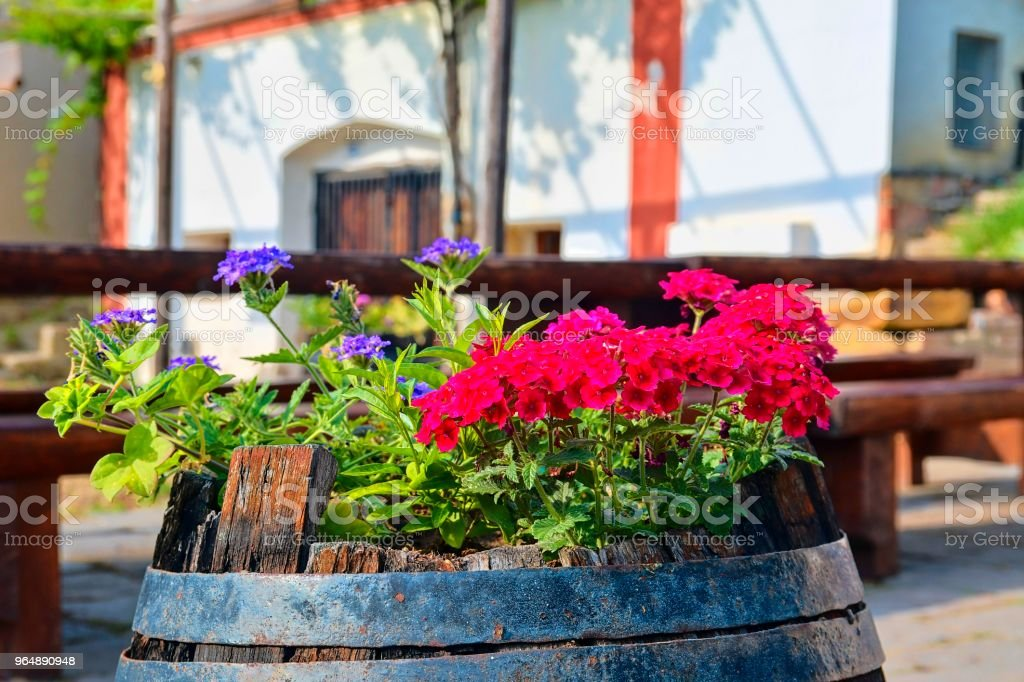 Old rustic wine barrel with flowers. Wine background in Europe. Czech Republic, South Moravia. royalty-free stock photo
