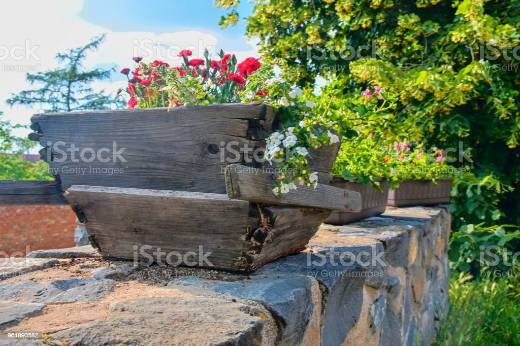 Old rustic wooden window box. Flowery background in Europe. Czech Republic, South Moravia royalty-free stock photo
