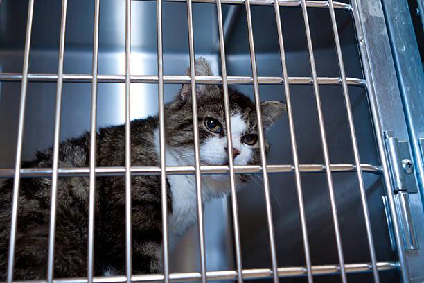 vieux chat désespérée triste - cage animal nuit photos et images de collection
