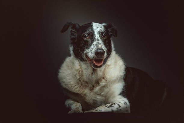 Old sad mixed-breed dog stock photo