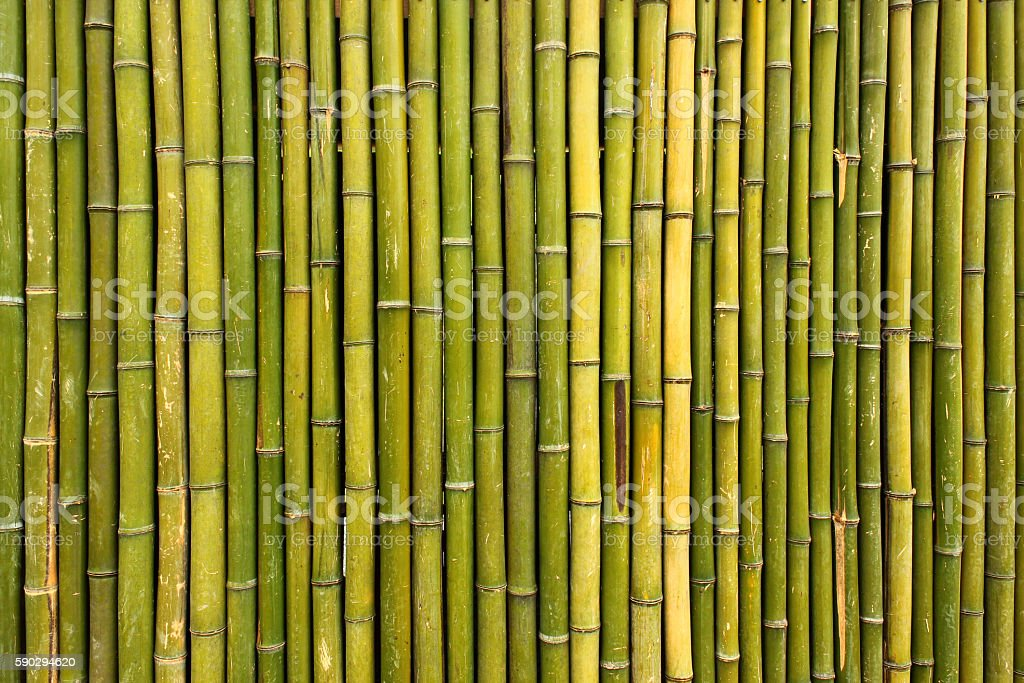 Old scratched green yellow bamboo fence background stock photo