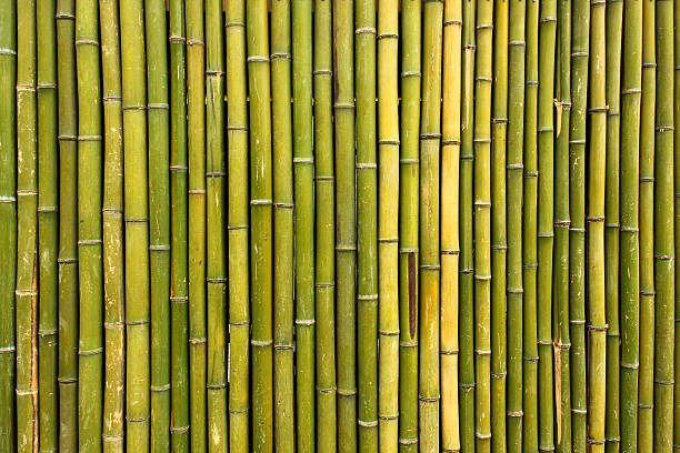 Old scratched green yellow bamboo fence background圖像檔
