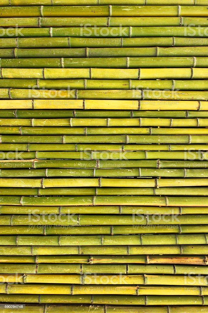 Old scratched green yellow bamboo fence background royaltyfri bildbanksbilder