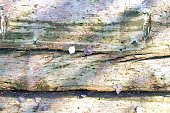 old semi-decayed boards and autumn leaves-background image