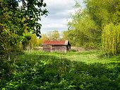 sunlight, trees and grassland