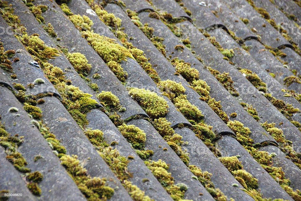 Old abrigo com cortina de teto e fundo de Alga Verde - foto de acervo