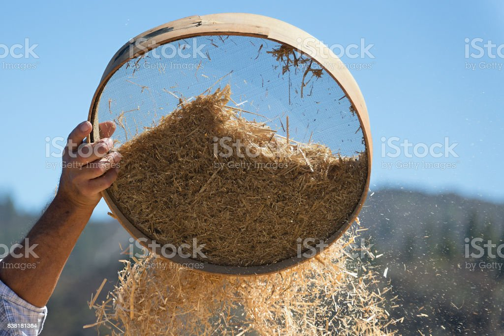 Old sieve for sifting flour and wheat,farmer sifts grains stock photo
