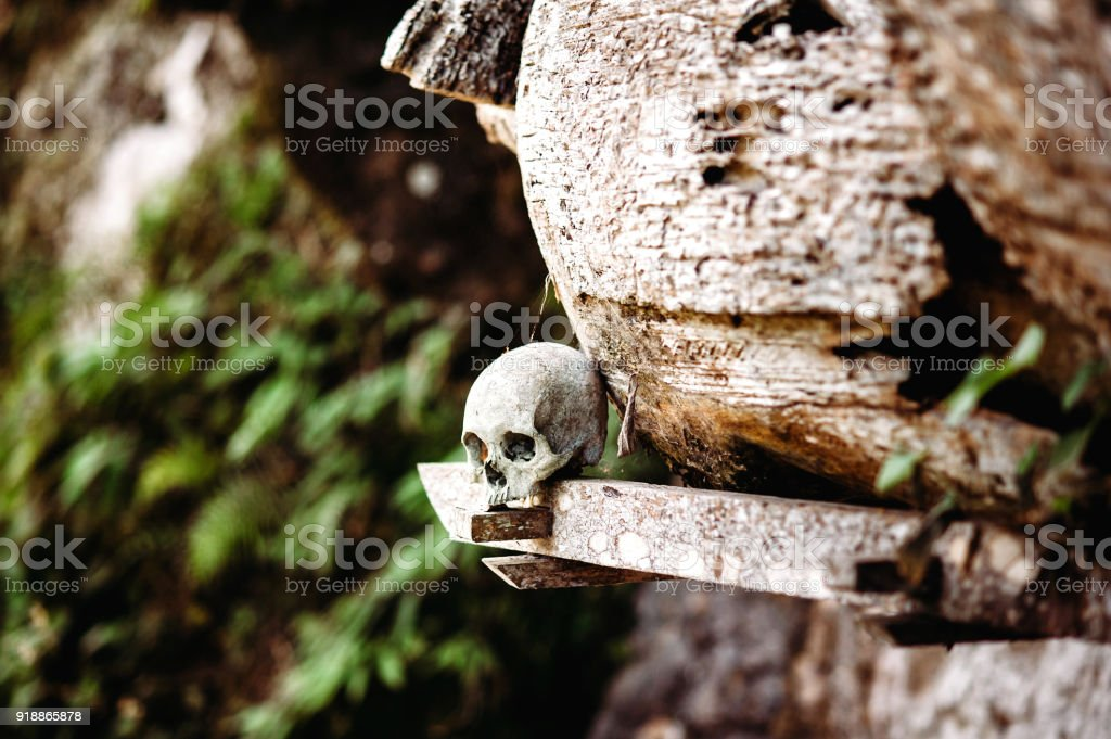 Old skull laying near wooden coffin. Hanging coffins, graves. Traditional burials site, cemetery Kete Kesu in Rantepao, Tana Toraja, Sulawesi, Indonesia. stock photo
