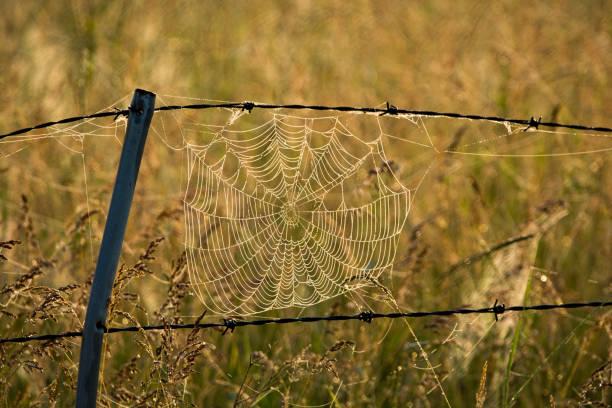 Antigua araña temprano en una mañana húmeda - foto de stock