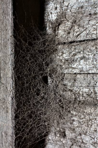Old spiderweb in an old dusty barn. Old spiderweb in an old dusty barn. ensnare stock pictures, royalty-free photos & images