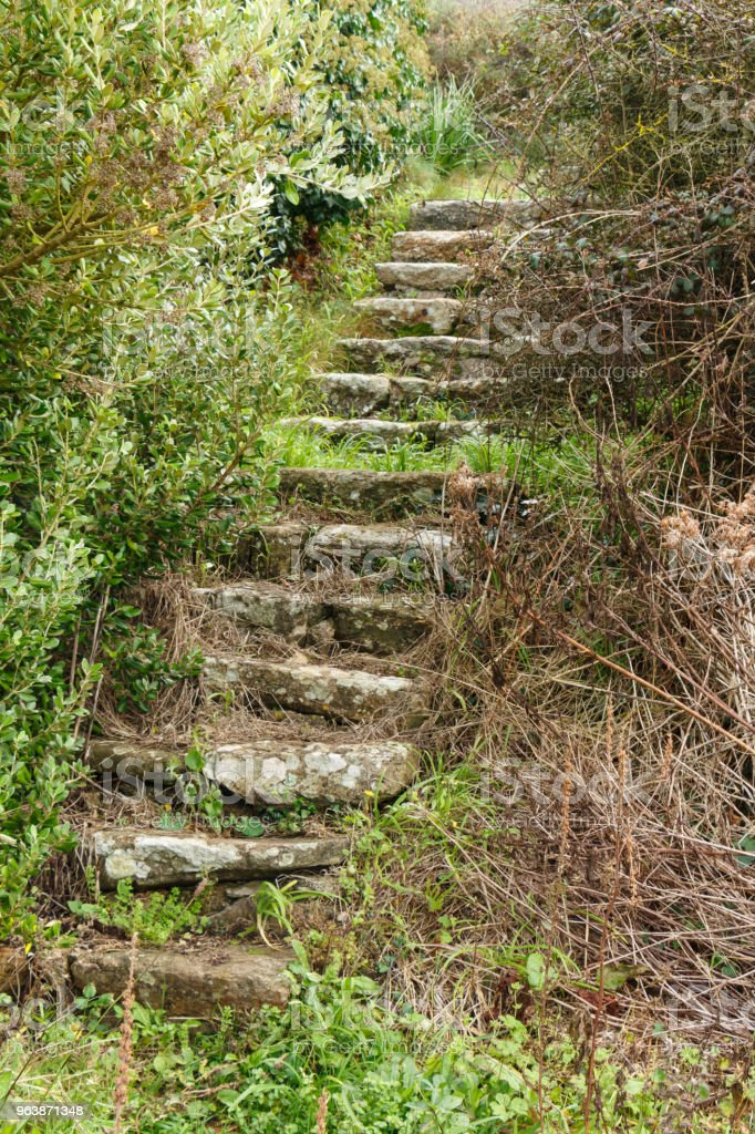 Old stairs disused in vegetation - Royalty-free Abandoned Stock Photo