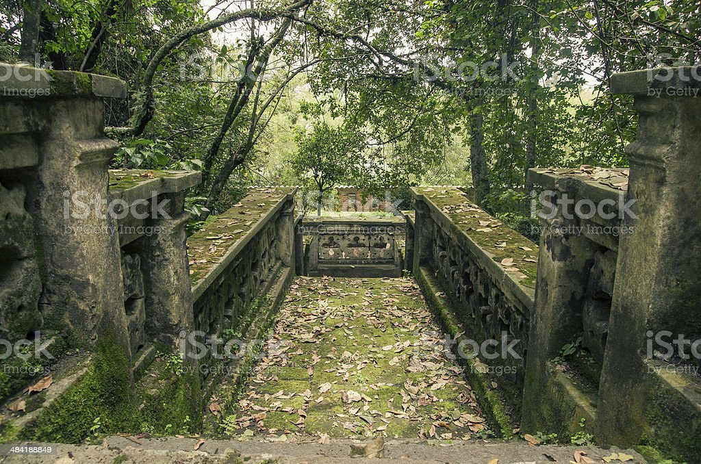 Old stone stairs in the jungle stock photo