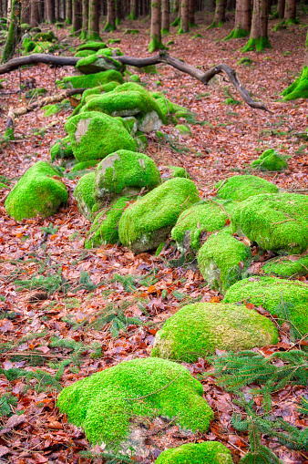 Old stone wall covered in green moss