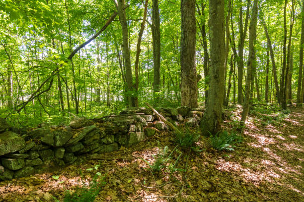 Old stone wall in the forest stock photo