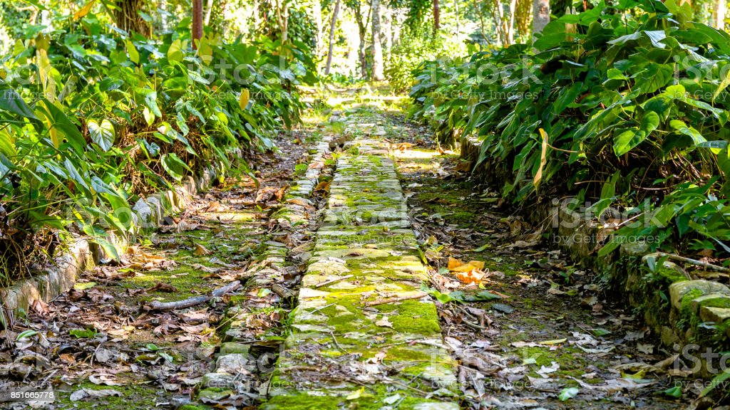 Old street at a nabandoned coffee plantation stock photo