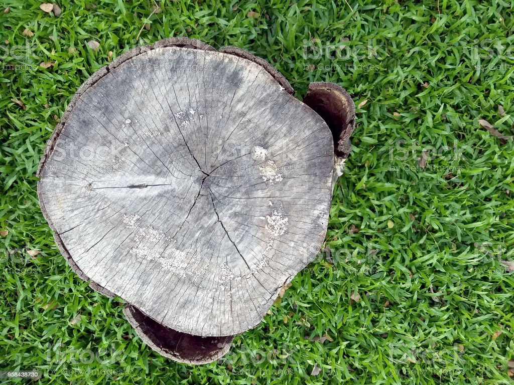Old Stump On Fresh Green Grass Field, Tree Stump Chair Used For Outdoor  Outdoor Royalty