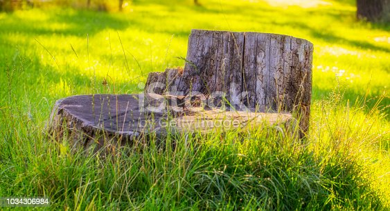 Old stump on the green grass in the garden, in the backyard