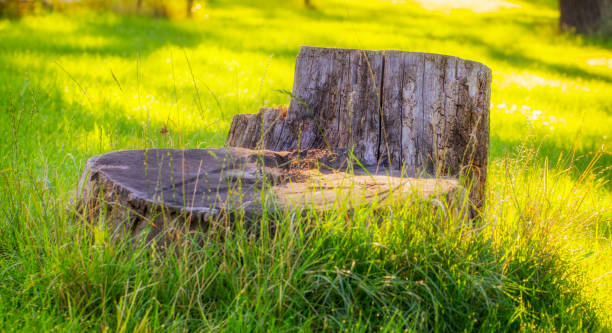 Old stump on the green grass in the garden, on backyard Old stump on the green grass in the garden, in the backyard grinding stock pictures, royalty-free photos & images