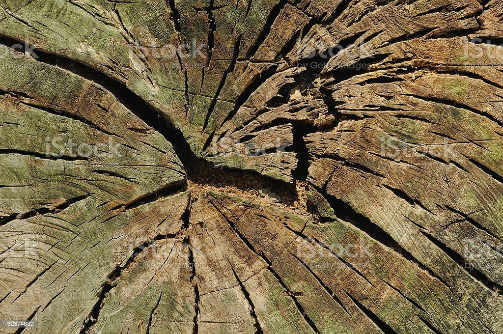 Old stump royalty-free stock photo