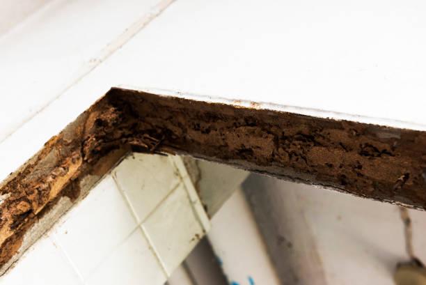Alten Termite-Trail im Haus Tür Grenze – Foto