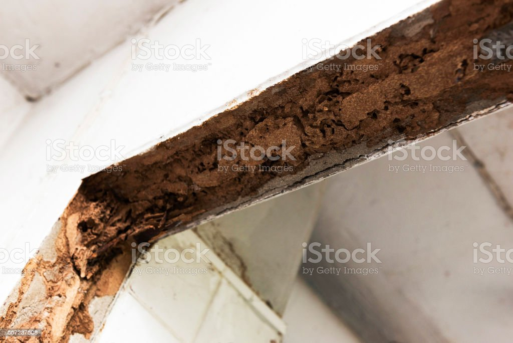 Old termite trail inside house door border stock photo