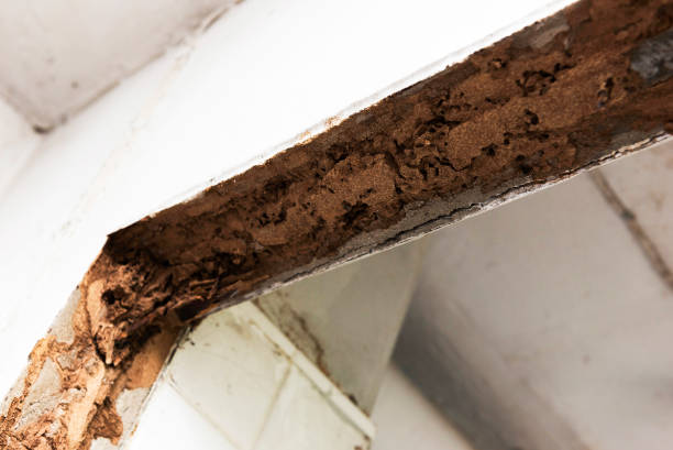 old termite trail inside house door border - termite stock photos and pictures
