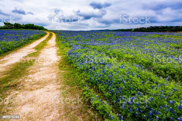 Photo of Old Texas Dirt Road in Field of  Texas Bluebonnet Wildflowers at Muleshoe Bend.