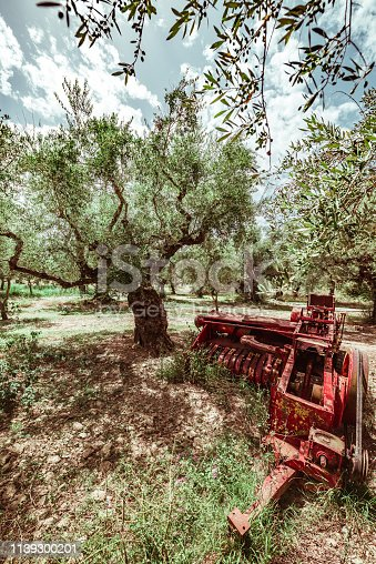 Old threshing machine on olive grove