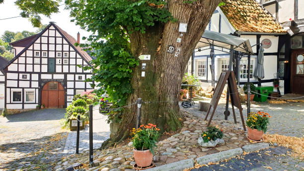 Old Tilia or Linden tree at town square Tecklenburg stock photo
